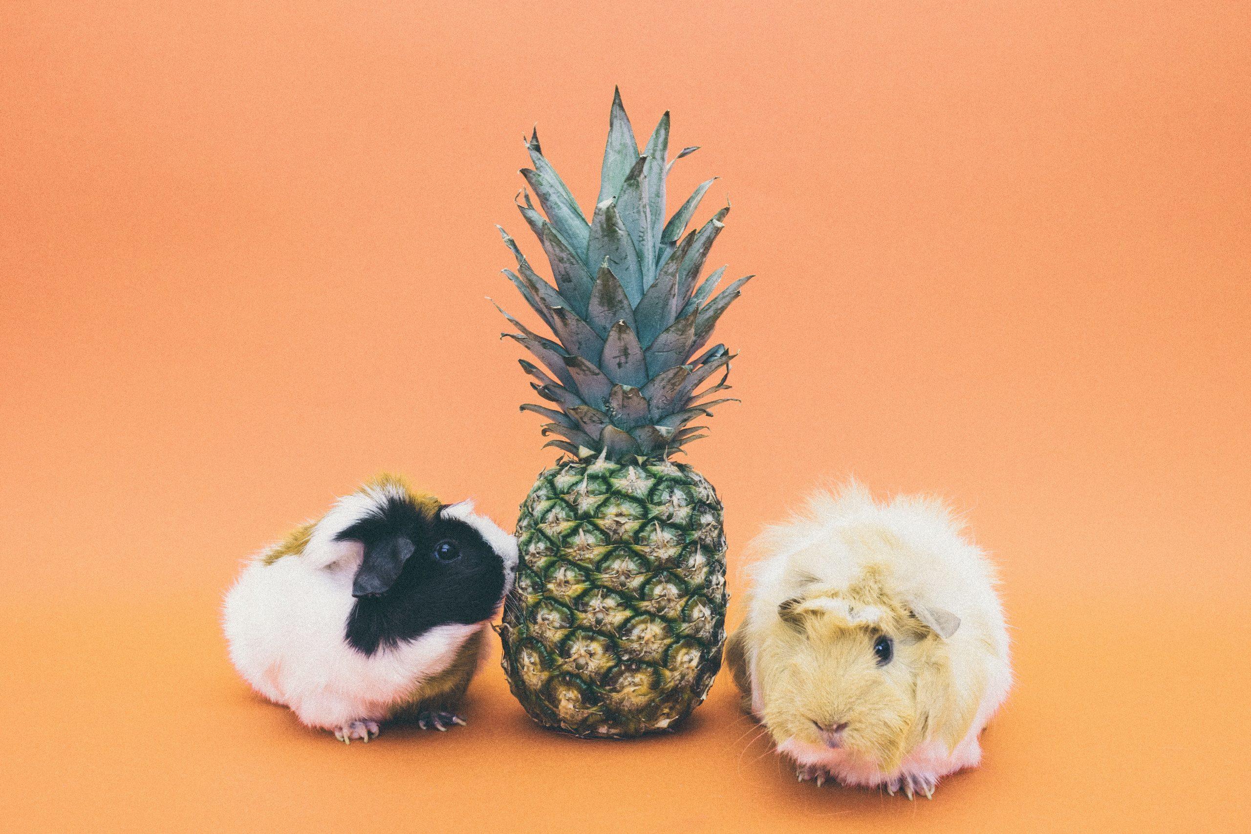 pexels-pineapple-supply-co-174667 (1)